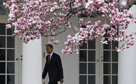 President Barack Obama walks back to the Oval Office under blooming Cherry Blossoms on March 23, 2011.