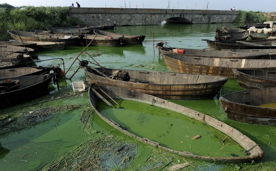 The algae-filled Chaohu Lake is seen in Hefei, Anhui province, on August 3, 2010.