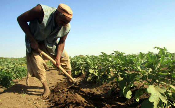 Large Scale Agricultural Investment: A Silver Bullet for Development?