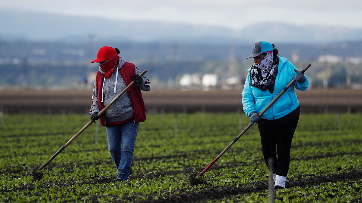 www.cfr.org: Coronavirus and Farmworkers: Is the Food Supply at Risk?